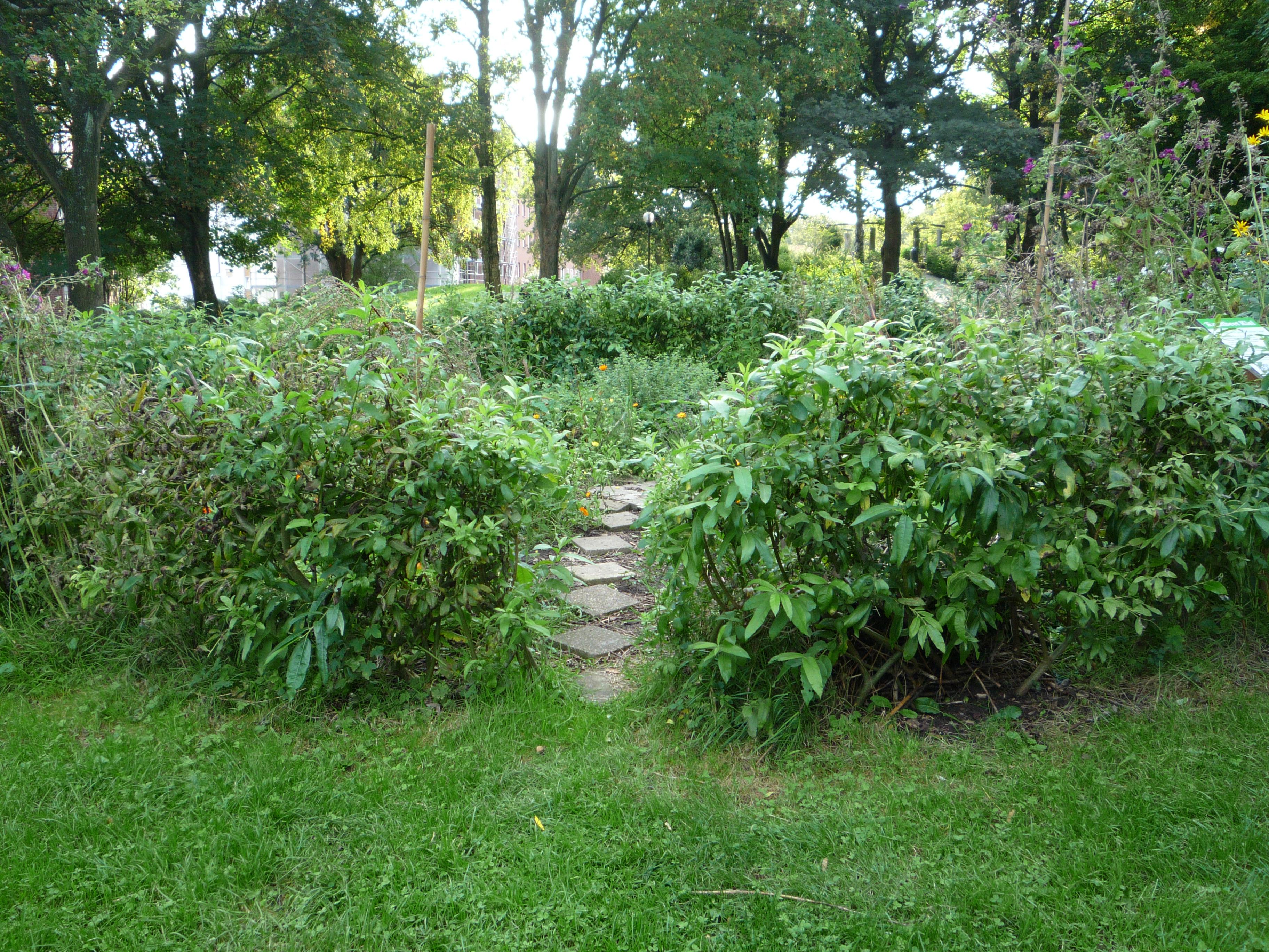 urban gardening Projekt in Kiel