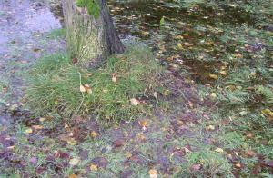 Land unter in Kieler Kleingärten